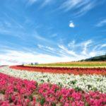 富良野の花畑